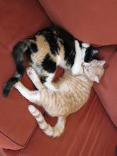 Photo: Kitty hug.