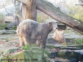Photo: Wieder oben - Knut widmet sich dem Jutesack ;-)