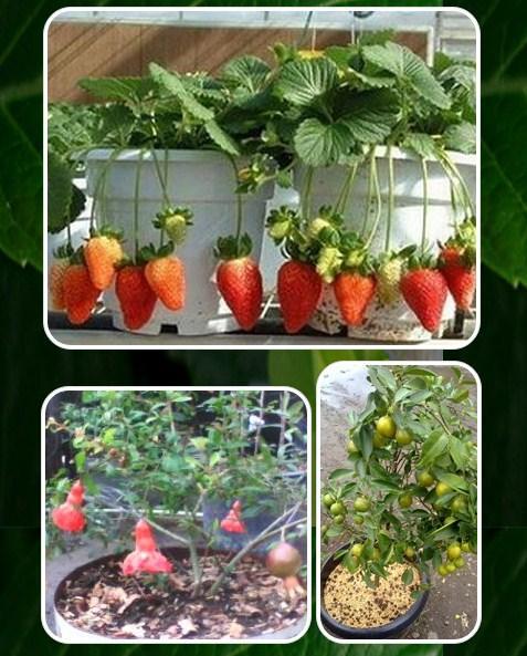 Arbres fruitiers en pot applications android sur google play - Arbre fruitier en pot ...