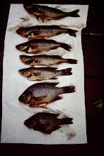 Photo: More fish.