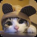 Cat Wallpaper icon