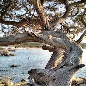 Un árbol, raíces, laberinto de amor. Vida by Juan Tomas Alvarez Minobis - Nature Up Close Trees & Bushes (  )