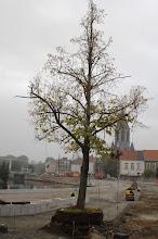 Photo: De vredesboom zou geïntegreerd worden in het plein. Uiteindelijk moest ie toch verdwijnen. De worteling zit te hoog ....