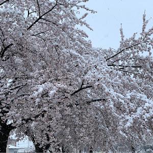 シエンタ  NCP175G 4WD・2015年のカスタム事例画像 mitsuさんの2020年03月29日10:09の投稿