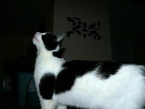 Photo: Aaarrrrgghhhh....I see a fly!