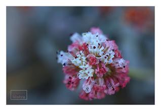 Photo: Eastern Sierras-20120715-245