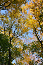 Photo: Fall is here at Half Moon State Park by Bill Steele