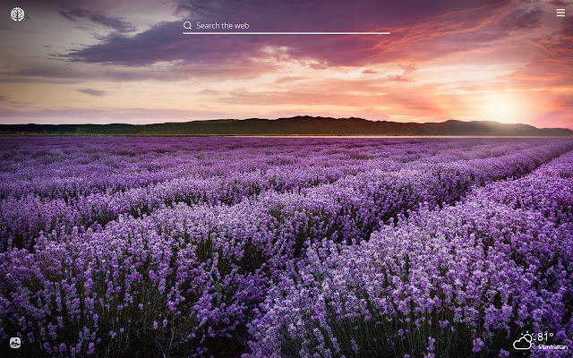 Lavender Flower HD Wallpapers New Tab Theme
