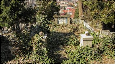 Photo: Iederă (Hedera helix)     - Turda, Cimitirul central - 2019.03.31