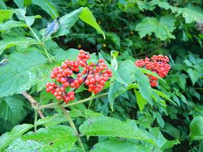 Photo: Red berries