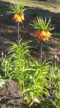 Photo: F4233824 w Ogrodzie Botanicznym