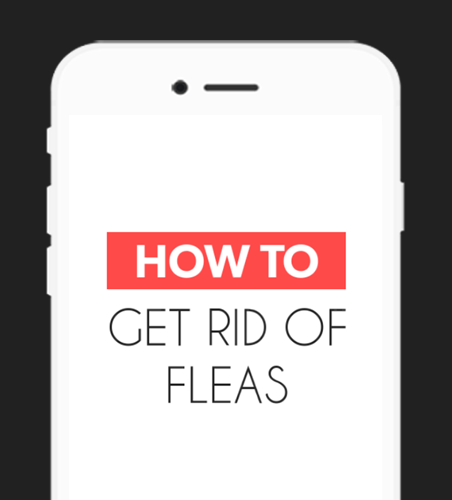 How To Get Rid Of Fleas Android Apps On Google Play