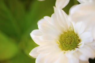 Photo: goodnight, sweet dreams....  #flowerphotography  #flowers  #macro  #breakfastclub  #nikon  #d700