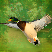 Duck Hunter VR