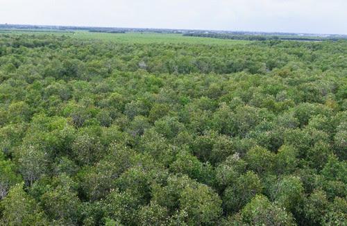 Về làng nổi Tân Lập khám phá rừng tràm 3
