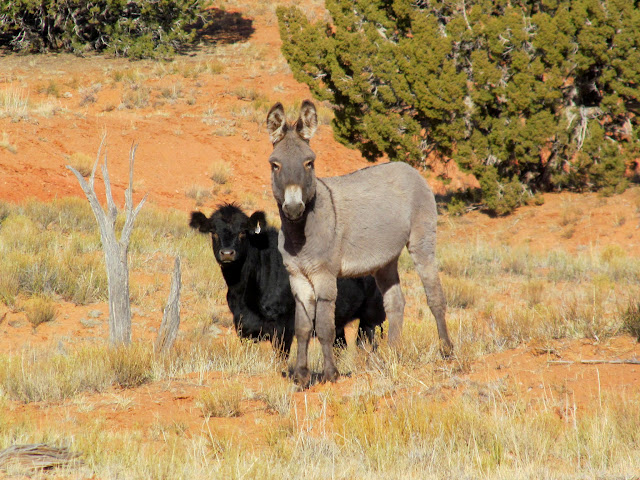 Cute burro and calf