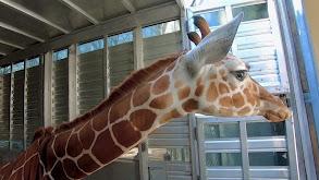 Giraffic Park thumbnail