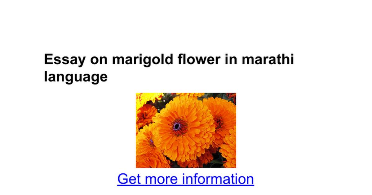 essay on marigold flower in marathi language google docs