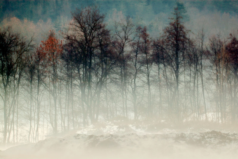 L' autunno ed i suoi colori di V. Mario Poddighe