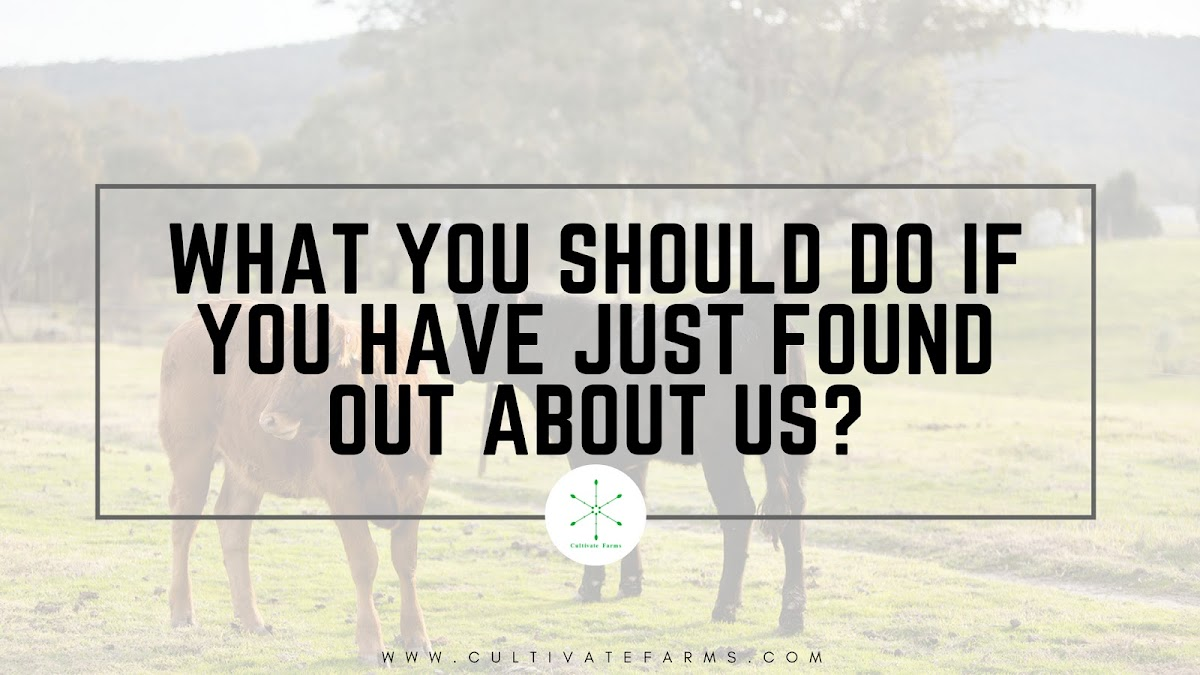 What you should do if you have just found out about us?