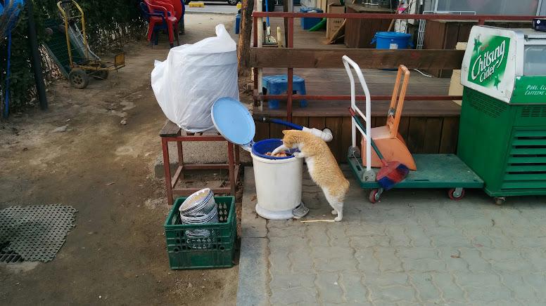 Ramyun Mania Cat