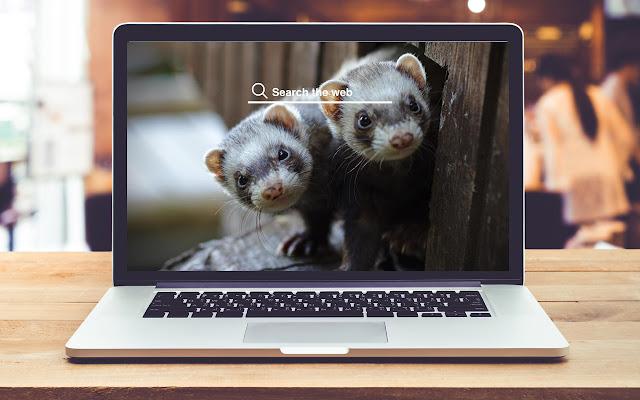 Ferrets HD Wallpapers Pet Theme