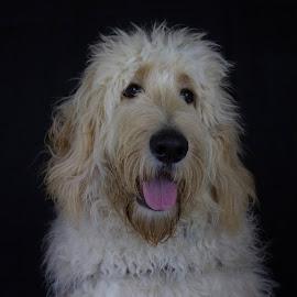 by Stuart Walker - Animals - Dogs Portraits