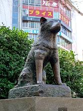Photo: Hachikó kutya, Shibuya állomás
