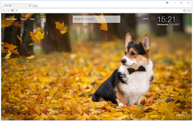 Corgi Wallpapers HD New Tab Corgis Themes