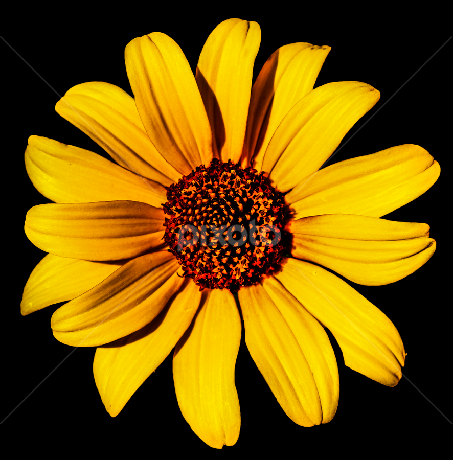 by Mark Pelkey - Nature Up Close Flowers - 2011-2013 ( yellow, gold, flower )