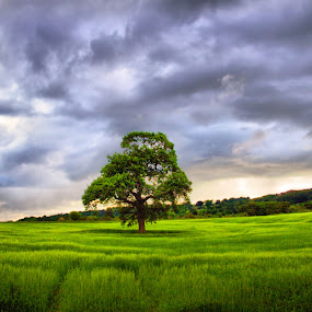 Gaia Braia by BethSheba Ashe - Landscapes Prairies, Meadows & Fields ( field, tree, purple, green, summer, scenic, evening )