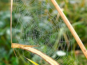 Photo: Tangled Web... #spidersunday #droplets