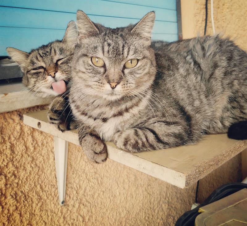 Linguacce feline di napoler80