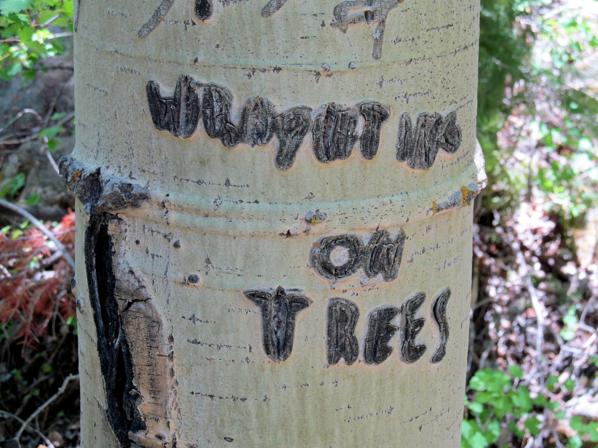 Photo: Writing on trees