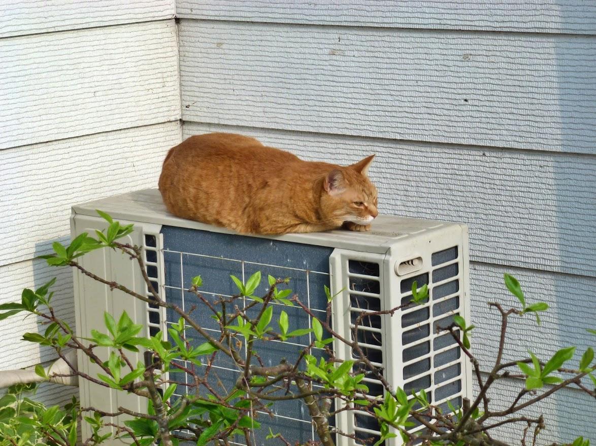 オーイングさんで見かけた猫チャン