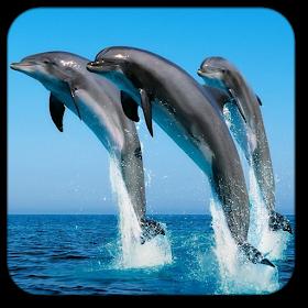 Дельфин Живые Обой