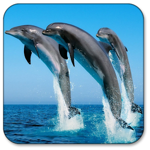 Dolphin Live Wallpaper download