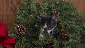 Puppy and Kitten Holiday Special thumbnail