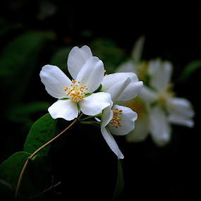 Mother by Joaquim Machado - Nature Up Close Flowers - 2011-2013