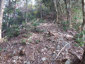 伐採されたよい道が続く