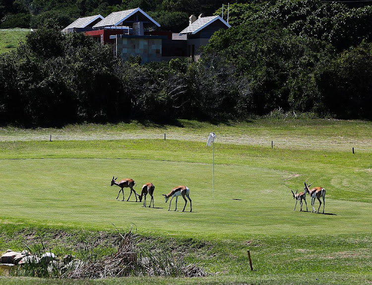 Animals roam on the nine-hole golf course at the Sardinia Bay Golf and Wildlife Estate