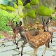 Deer Racing in Jungle
