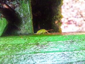 Photo: Ein flotter Käfer - gut getarnt - siehst du nicht? (An senkrechter Fläche - das muß ihn erstmal jemand nachmachen!)