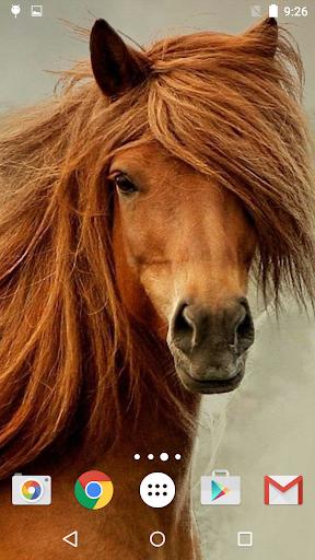 馬 ライブ壁紙