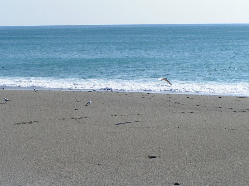 Spiagge di rosario.vicino