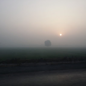 Foggy Morning by Zubair Chana - Instagram & Mobile Android ( foggy, sunrise, field, tree, dawn, misty, morning, fog )