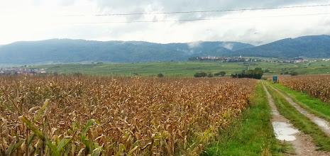 Photo: Le massif des Vosges. Zellenberg au 1er plan.