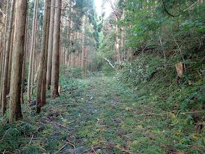 植林帯に入ると道一面に枝が