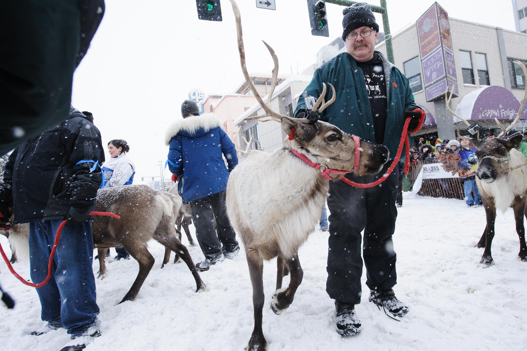 Rondy Reindeer, Anchorage, Alaska
