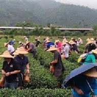 鵝山茶園有機體驗農場